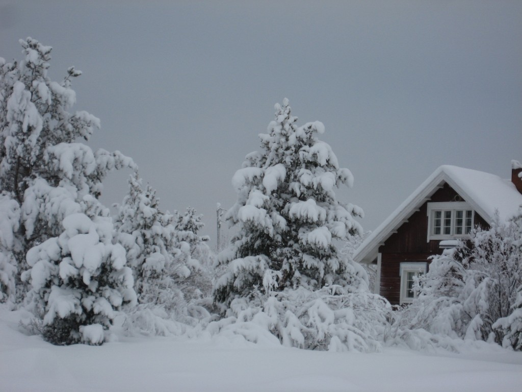 January, snow, no sun.